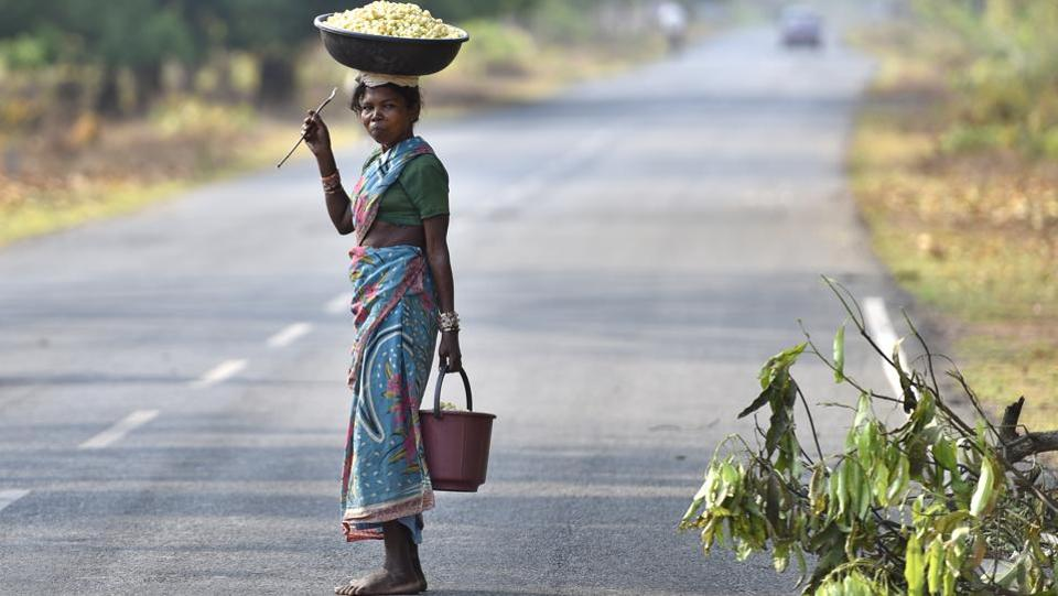 A tribal woman carries a haul of Mahua flowers on her head. Climbing or cutting the tree is taboo among some tribes. During picking season, women and children head out early in the morning to clean the floor beneath trees and return with mature flowers that have fallen naturally. (Sanchit Khanna / HT Photo)