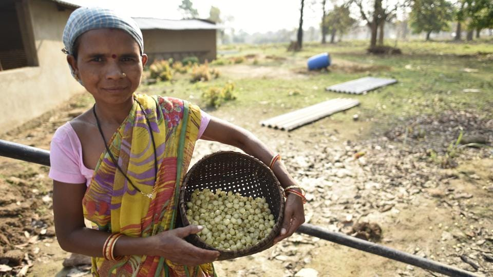 These edible flowers are also used to make syrup for medicinal purposes and can also be used to make jams. In many parts of Bihar the sun-dried Mahua flower is ground into flour to make various kinds of bread. (Sanchit Khanna / HT Photo)