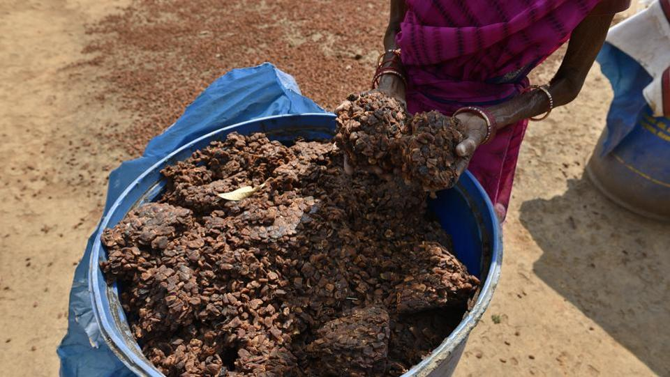 Photos: Making Mahua -- wine from a flower sacred to Chhattisgarh