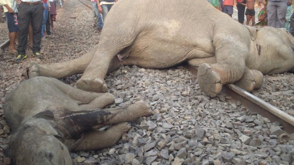Four elephants of a herd were mowed down by a speeding train in Odisha on Monday.