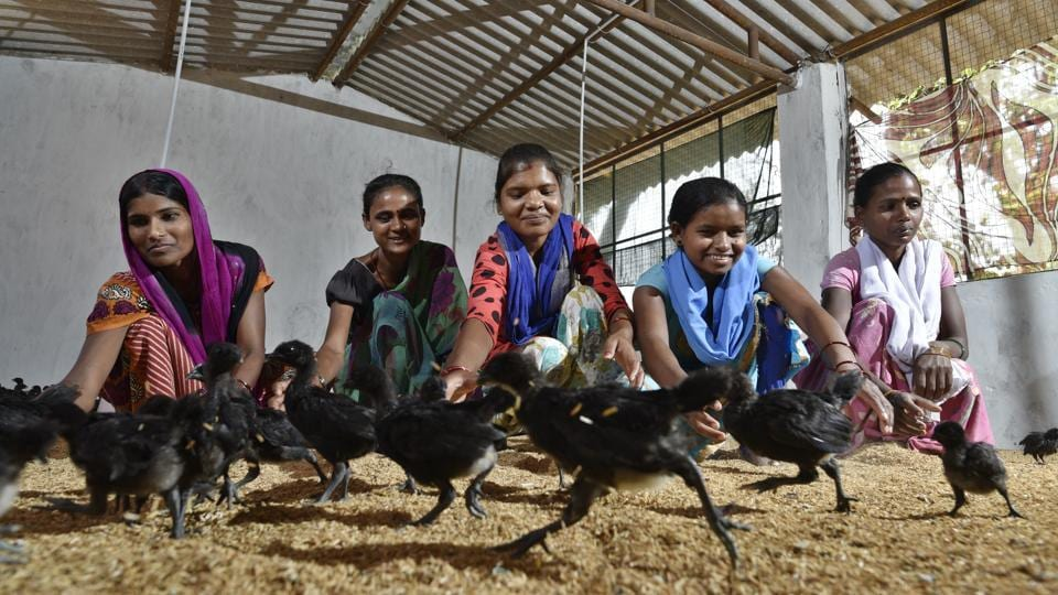 As part of a district-level initiative, Dantewada women are being given Kadaknath chicks at a fraction of the cost, and with the money made from rearing and selling them, they're rain-proofing homes, paying for siblings to go to college and, in one case, buying a motorcycle. (Sanchit Khanna / HT Photo)
