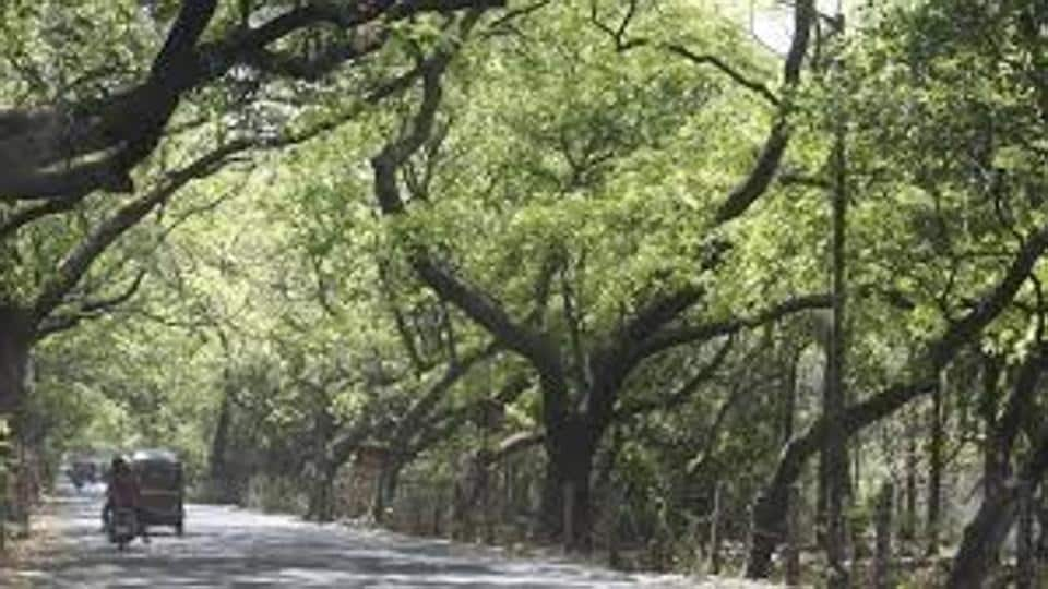 The letter further legitimises their claim to give Aarey a forest status, the environmentalists have said.