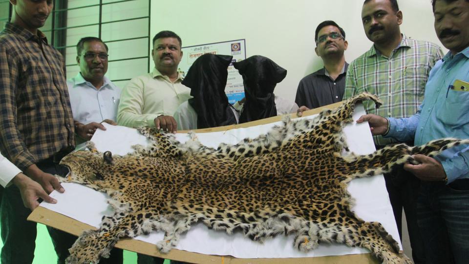Mumbai,Thane,leopard