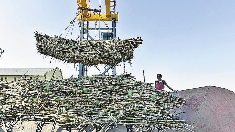 The state expects over 101 metric tonne (MT) of sugar production this year. Due to excess production, the factories have shown reluctance to pay as per fair and remunerative price.