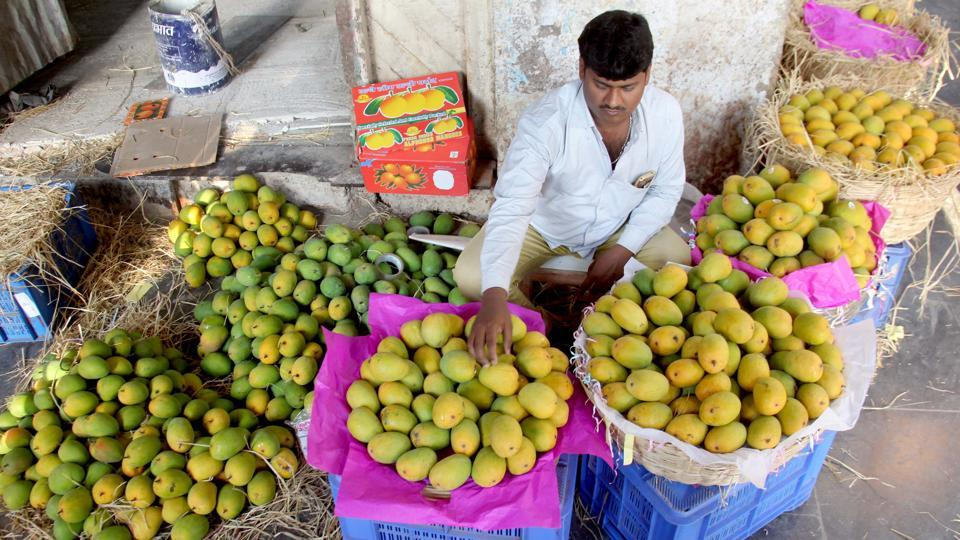 Vendor sealing the Famous Mango (Alphonso) of Konkan Region for sale arrived in Crawford Market, in Mumbai.
