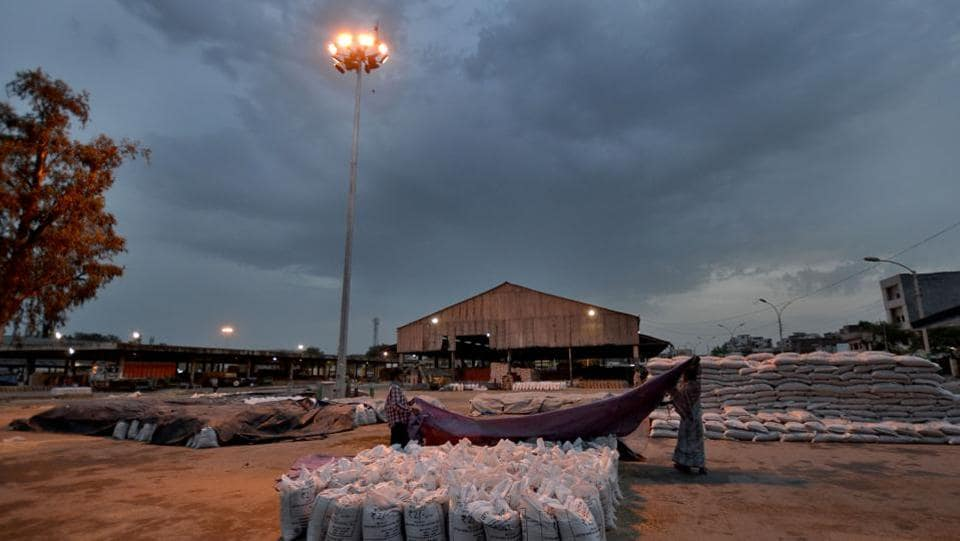 Labourers covering wheat bags with plastic sheet as it was about to rain, at New Grain Market in Jalandhar. (Pardeep Pandit/HT )