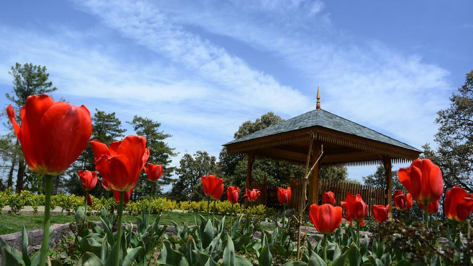 This small tulip garden, amid oak, pine and cedar trees, attracts over 100 tourists a day.