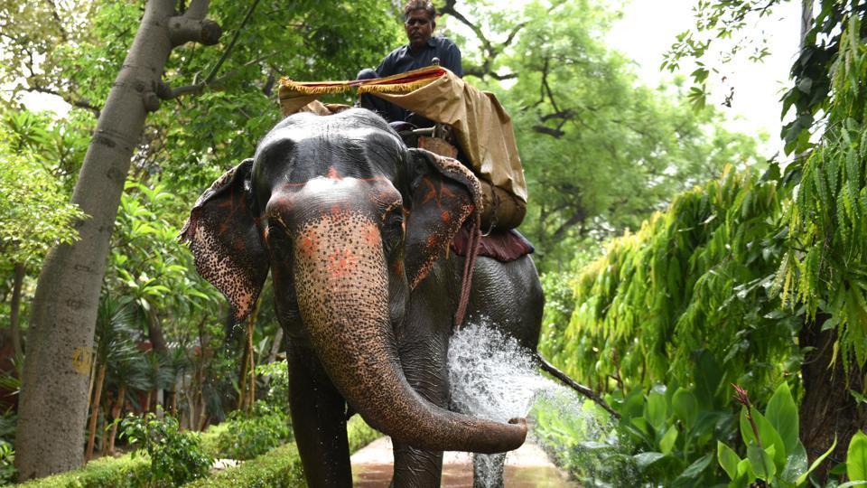 Last elephant,Delhi elephants,Laxmi