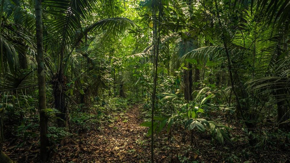 Peruvian Amazon forest,Peru,Canadian killed in Amazon