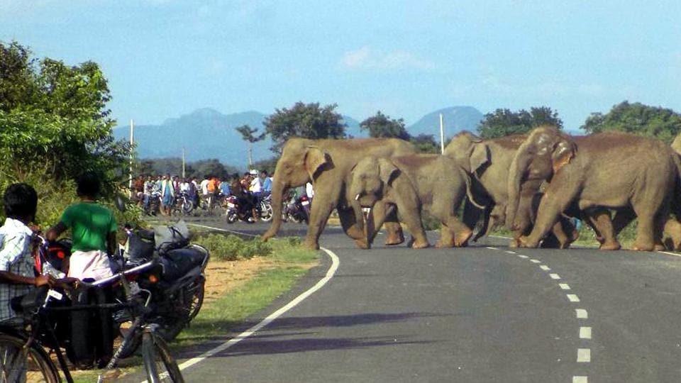 elephant corridors,human-animal conflict,Supreme Court