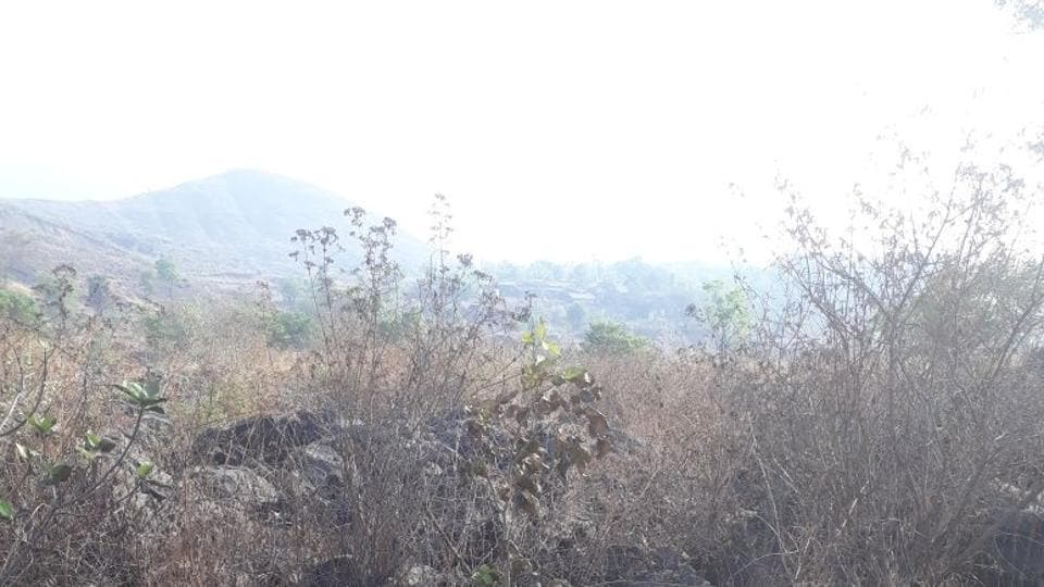 Charred remains of trees in Kharghar Hills.
