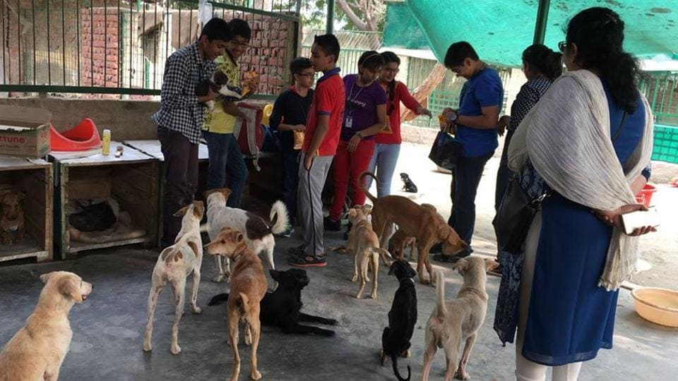 NGOs such as the Animal Hospital and Shelter, Noida help with the treatment and sterilisation of stray dogs.
