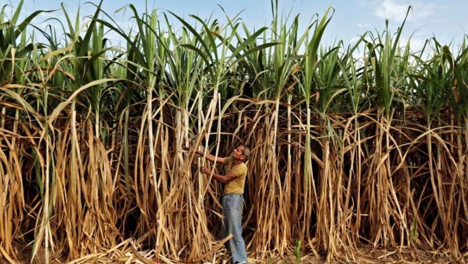 Indian mills owed Rs 180.44 billion to cane farmers as of April 12, according to a government official, who asked not to be identified citing rules