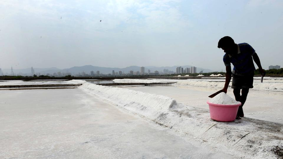 The city has 130 hectares of saltpan land, which is equivalent to the size of 14 Oval Maidans (9 hectare) in south Mumbai.