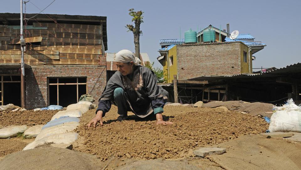 A woman spreads out clods of clay to dry in the sun before they're sculpted into tumbaknaris and other earthenware. Once dry, water is added to mesh and crush the lumpy clay, preparing it into a pliable mass ready for the potter's wheel. (Waseem Andrabi / HT Photo)