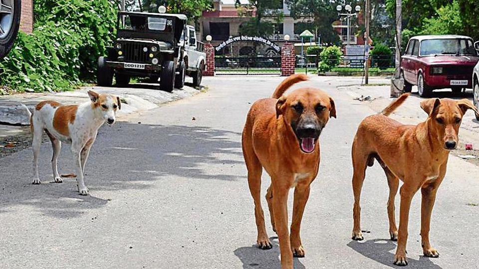 Against a population of over 5,000 stray dogs in Mohali, only 2,405 have been sterilised between June 2017 and March 2018.