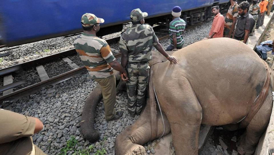 Railway data shows that 70 elephants have died after being hit by trains since 2013.