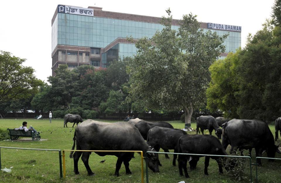 Uttarakhand,Beef exports,Animal health