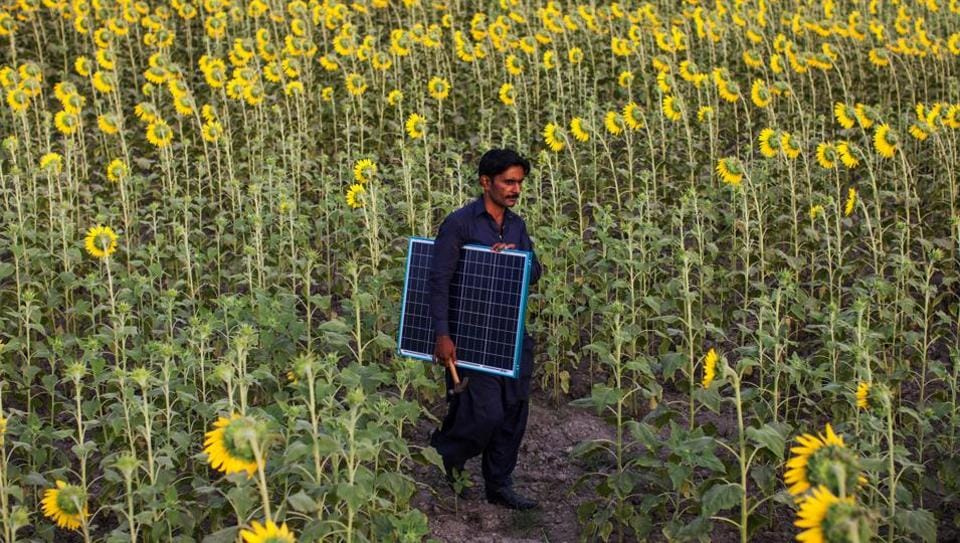 An EcoEnergy technician carries a solar panel through a sunflower field in Sujawal, Sindh, Pakistan. Rural Pakistanis are increasingly turning to renewable energy to circumvent the country's notoriously unreliable power supply. (Asim Hafeez / Bloomberg)