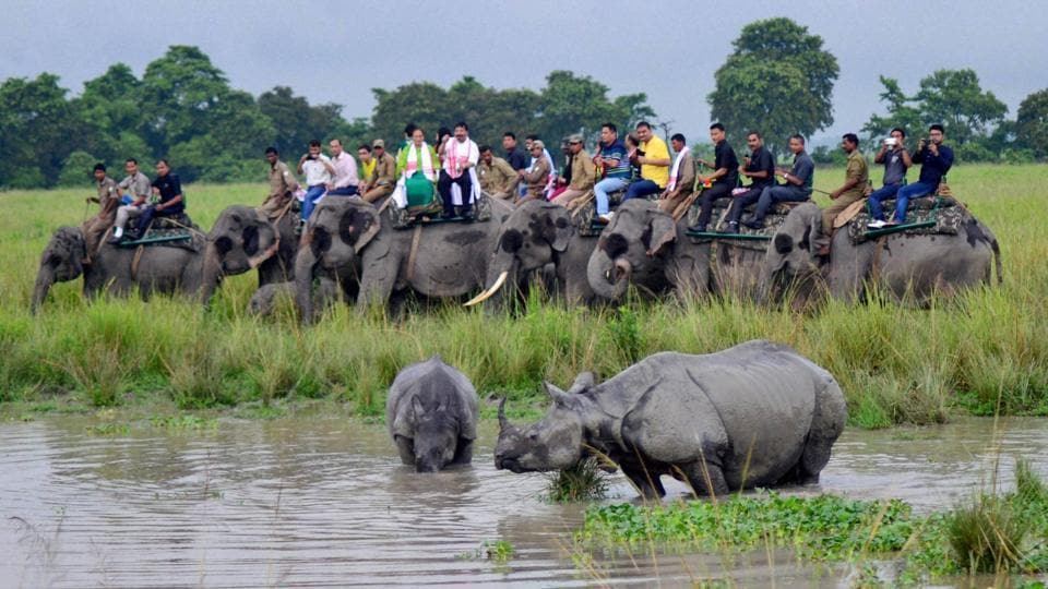 Tourists watch a one-horned rhino with her calf as they cool off, during an elephant safari in Kaziranga national park.
