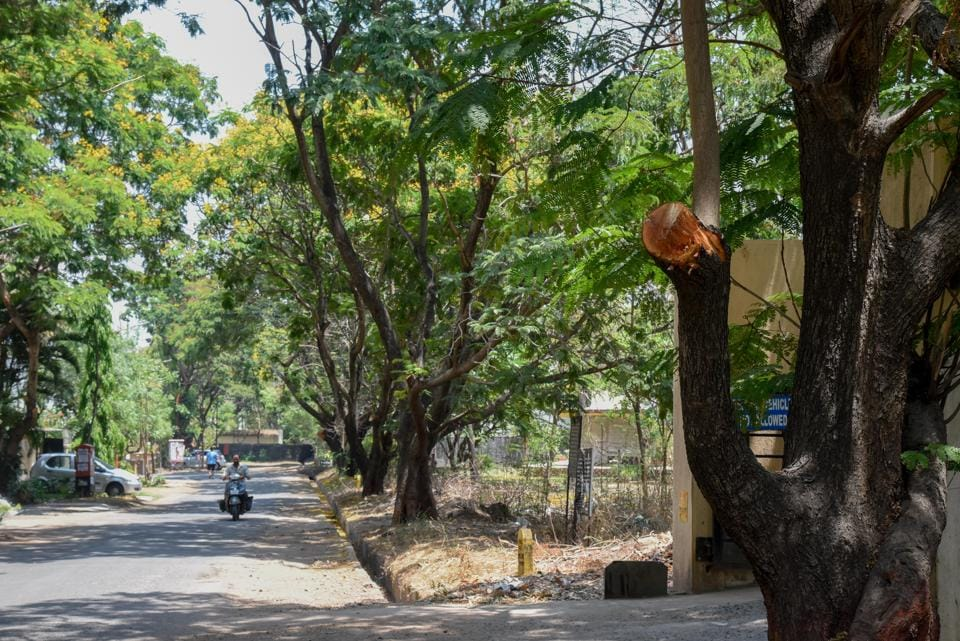 Trees were 'trimmed' at Ramnagar colony in Bavdhan.