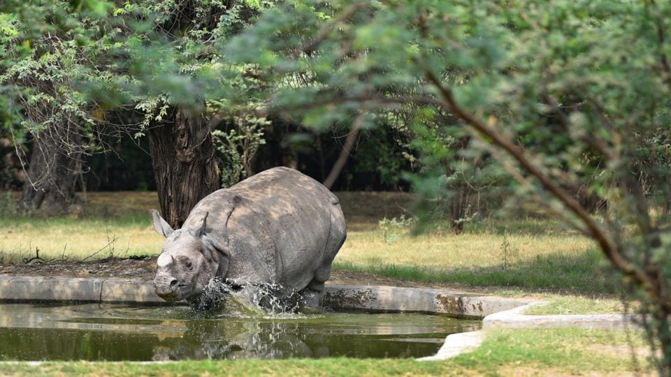 A Rhinoceros tries to cool down on a hot day at Delhi Zoological Park on April 29, 2018. (Sanchit Khanna / HT Photo)
