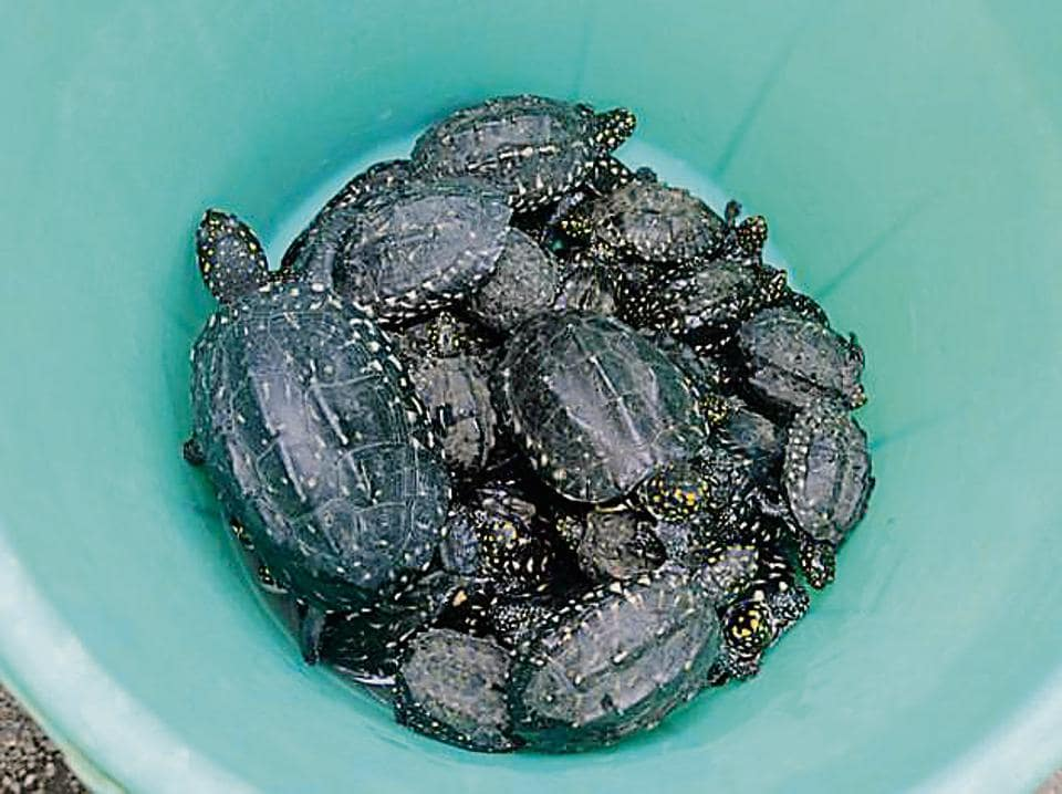 A few of the turtles cops rescued onSaturday.