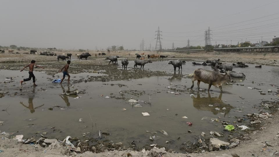 But the proposed landfills have triggered protest from activists and experts claiming that Delhi would be committing its 'gravest mistakes' if it allows dumping grounds to come up on the floodplains. On the other hand EDMC officials claim that these won't be traditional dumping sites which could destroy the floodplain. (Anushree Fadnavis / HT Photo)