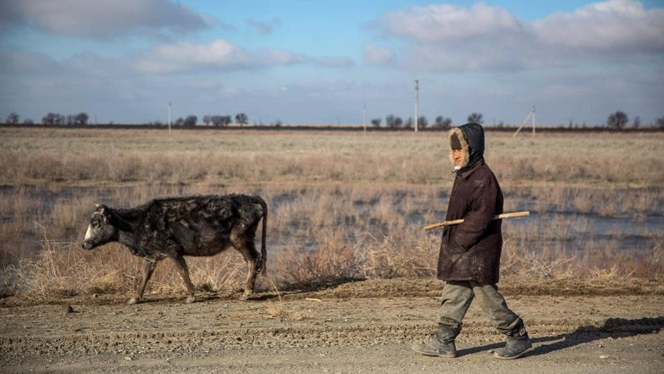 A man herds a cow along a road in Uzbekistan. The city's suffering is not just limited to the collapse of its fishing industry. With no water body to moderate the weather, residents have to battle ecological changes with the climate swinging severely between extreme heat and Siberian cold. (Taylor Weidman / Bloomberg)