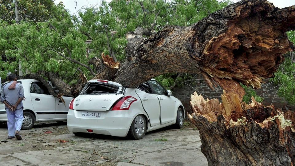 Damaged cars after a tree fell on them during a storm in Patiala.
