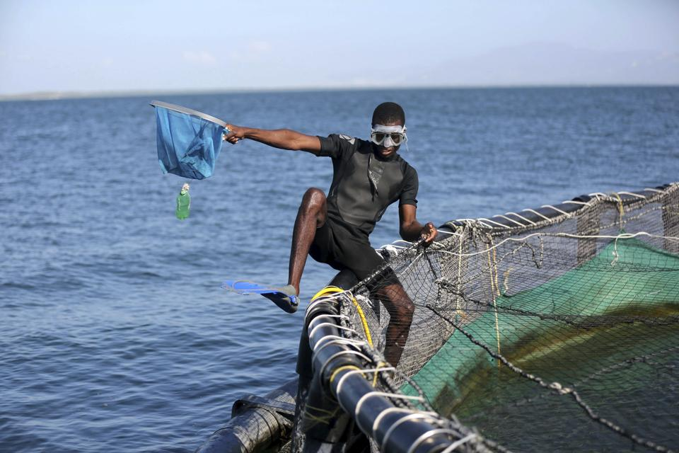 A Taino Aqua Fish worker cleans a large fish cage on Lake Azuei, a turbulent expanse of water that has often been cruel to those living along its shore, flooding homes in the border town of Fond Parisien, Haiti. Two Haitian brothers left jobs in the United States to come back and address a local concern for a lack of affordable fish. (Dieu Nalio Chery /AP)
