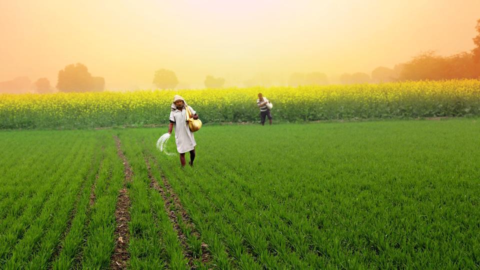 Madhya Pradesh to produce organic fertilizer from human hair