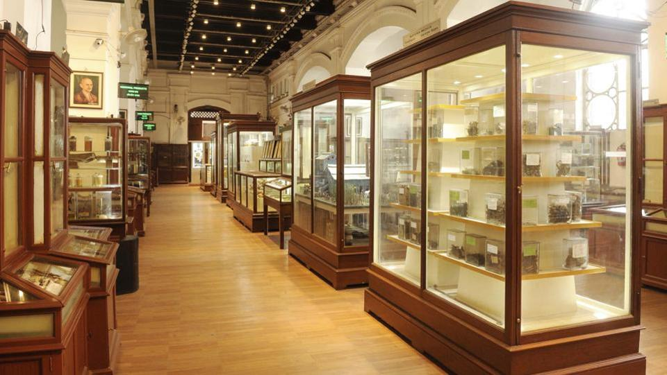 A general view of the Botanical gallery, one of the four galleries housed under the museum which also opens to the public after 2 years of renovation work. This gallery now has around 16,000 artefacts displayed in upgraded showcases with a new LED lighting system in the displays as well as from the ceiling. (Samir Jana / HT Photo)