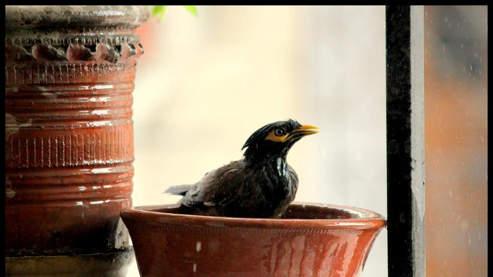Place shallower water bowls on an elevated spot for birds to take a dip in.