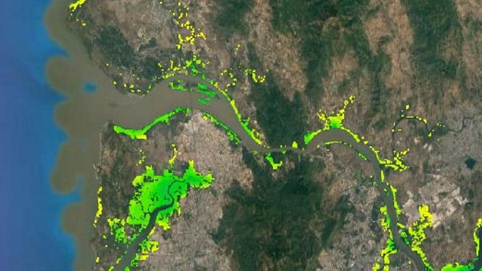 Mangrove cover over the Mumbai region.