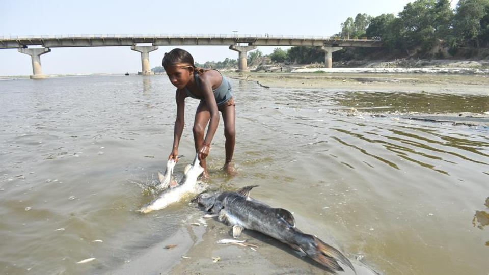 A child picks up a dead fish that washed up on the banks of the Ganga on Monday.