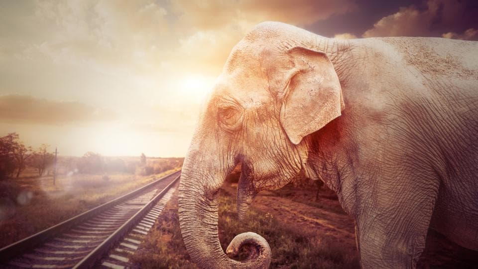 The Indian Railways has imposed speed restrictions of 30kmph to 50kmph along several stretches of tracks in the Northeast to ensure that trains don't crash into elephants.
