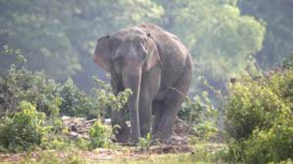 Sundaresan, the 45-year old priest, also brought in an elephant unauthorisedly for prayers seeking longevity for his father.