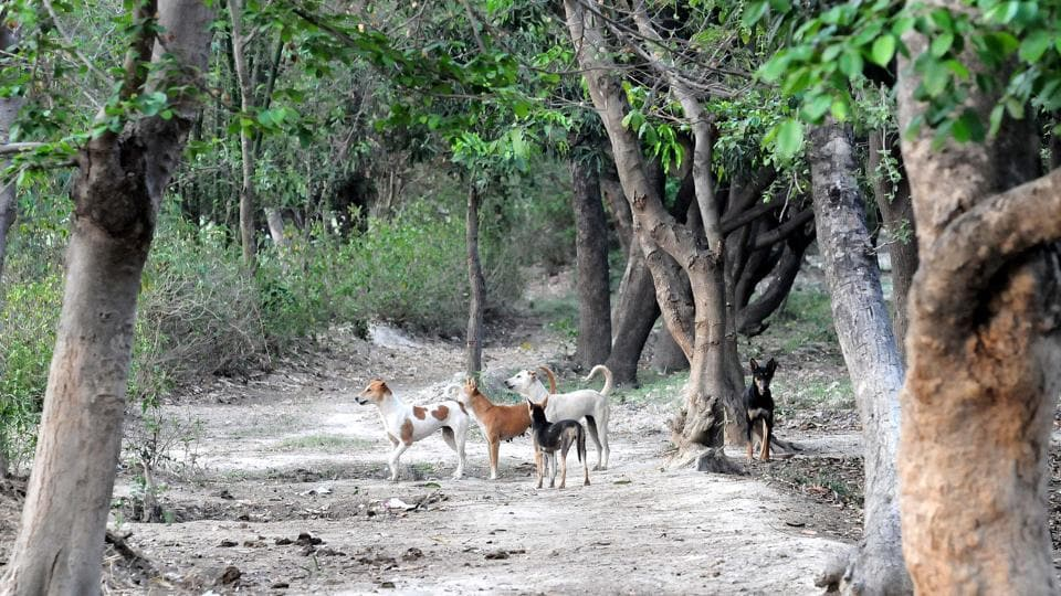 WII experts,Feral dogs,Sitapur DM