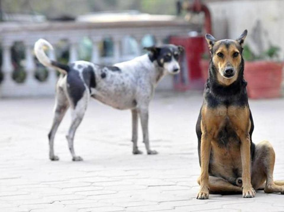Stray dogs were noticed on the hospital campus every day and even in and around the wing where dog bite cases are treated.