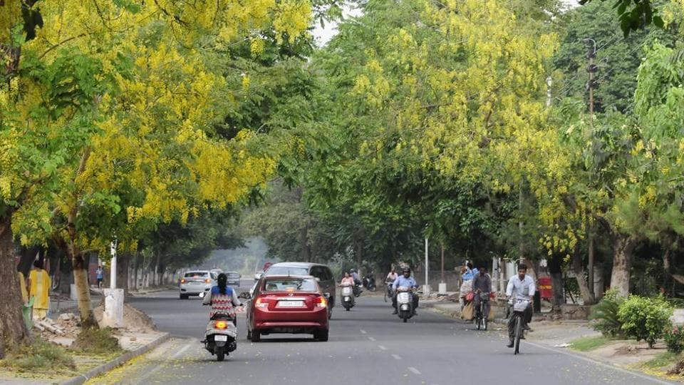 Clean tree-lined roads, like this one at Sector 33, seem to have contributed in Chandigarh's ranking in Swachh Survekshan.