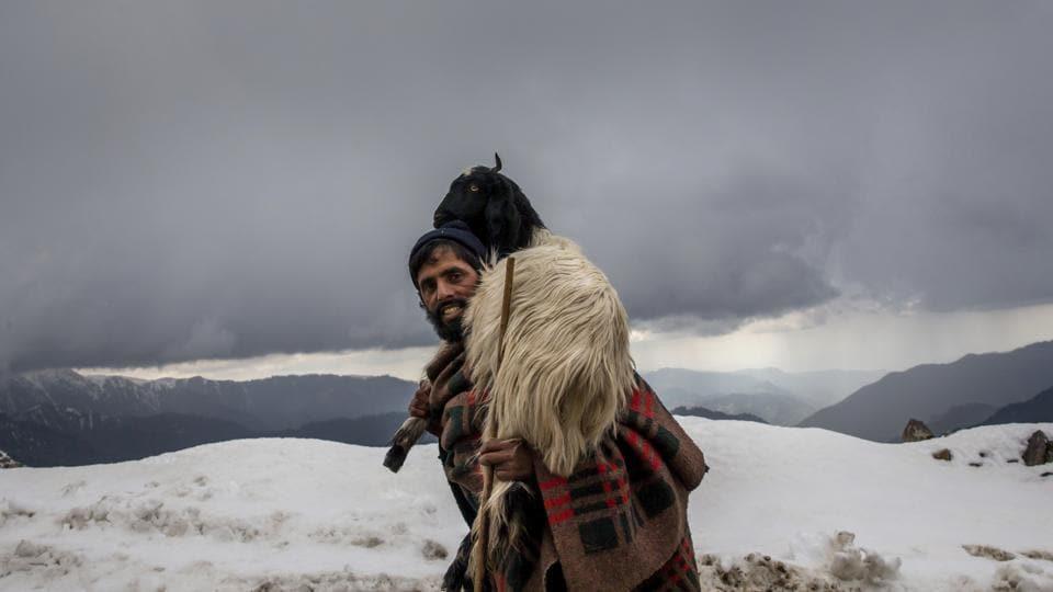 Gul Khan, a Kashmiri nomadic Bakarwal man carries a tired goat on his shoulder as he leads a herd at Peer Ki Gali, south of Srinagar, Jammu and Kashmir on May 9, 2018. (Dar Yasin / AP)