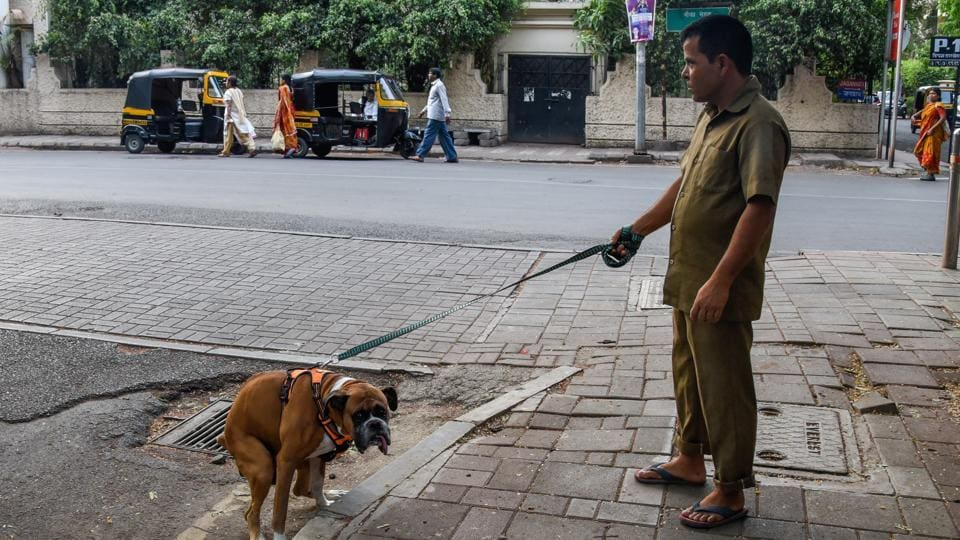 A pet dog defecates near the footpath on Boat Club road in Pune.