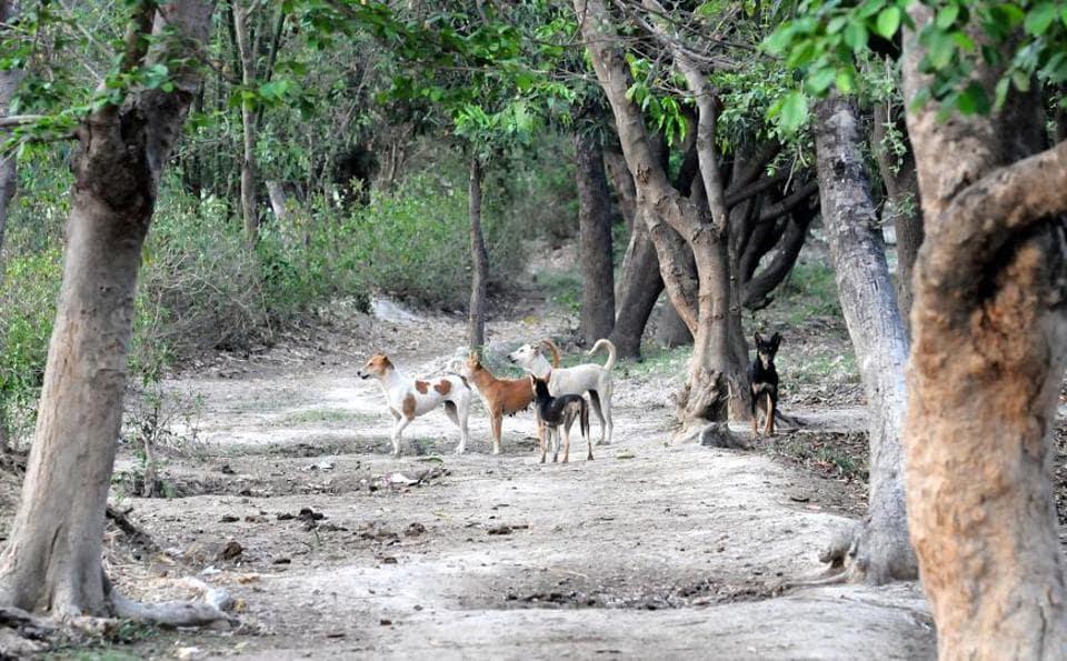Dog bites,Canine attacks,Uttar Pradesh