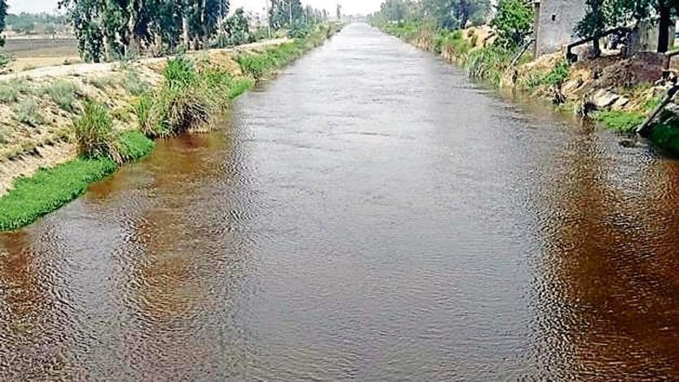Water in a Muktsar canal turned black on Sunday.