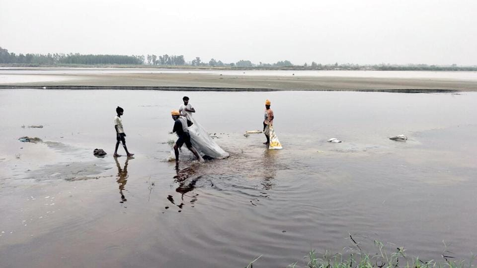 Beas river,Molasses leak,Punjab