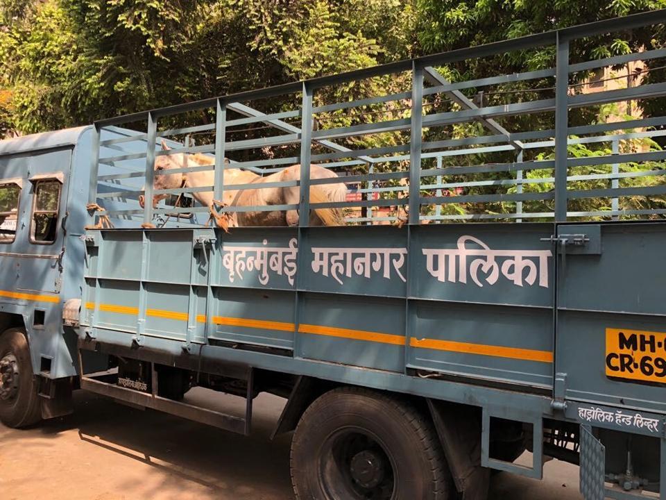 Mumbai,two malnourished horses rescued,Victoria carriage joyrides