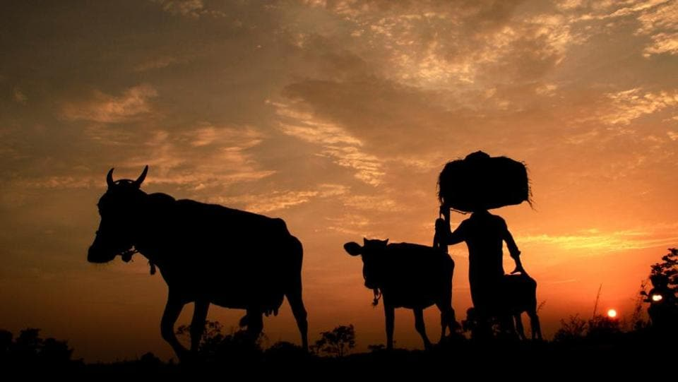 Farmer dies,Madhya Pradesh,Rajgarh