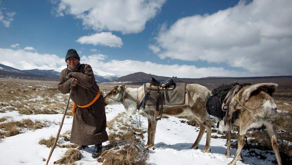 """Erdenebat Chuluu, a nomadic herder, shouts words of encouragement to the reindeer he is riding. """"Chu!, Chu!,"""" he calls, urging the animal out of a cedar wood and onto a plain in the southern reaches of the Mongolian Taiga. Once in the open, they gingerly step over fallen trees and navigate creeks of melted snow, oblivious to the late winter chill. (Thomas Peter / REUTERS)"""
