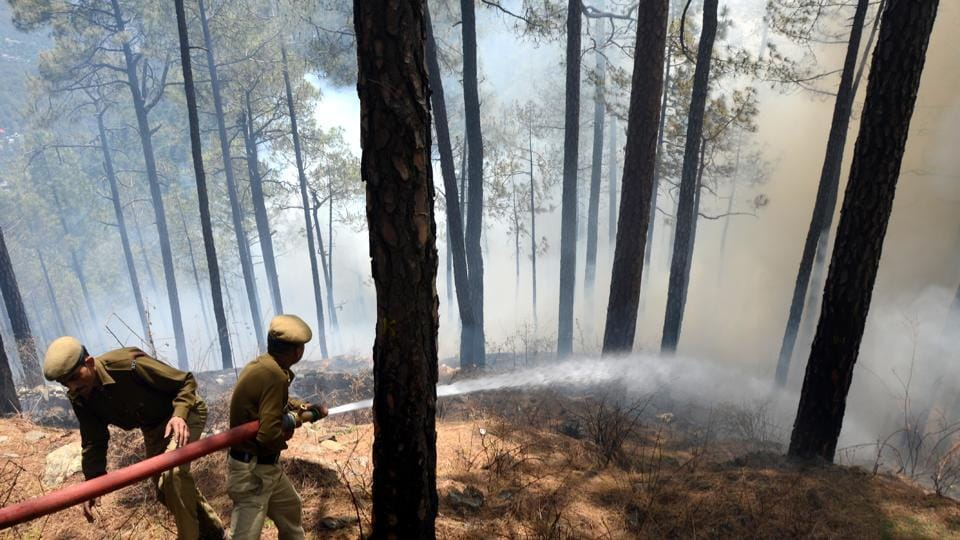Wildfires have gutted 2,895 hectare forest cover, including 33.2 hectare of plantation, in the state since the begging of forest fire season on February 15.